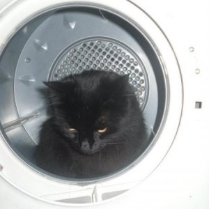 Mr Minty cat in the dryer his favourite hiding place