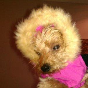 Poor  Millie dog modelling her new coat