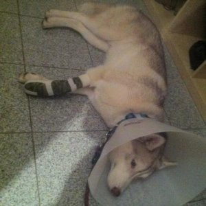 amazing that a sprained foot was all that happend!