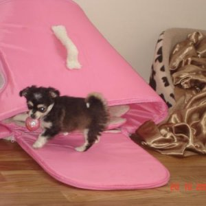 Gucci as a Puppy