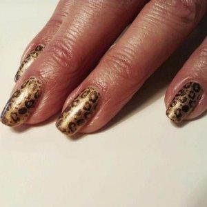 sugared spice leopard
