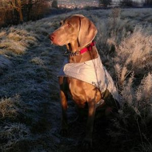 My gorgeous girl. On a frosty morning walkies Nov 2012
