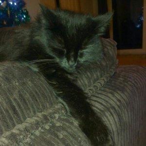 minty cat