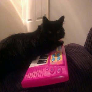 musical minty cat