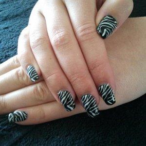 shellac zebra