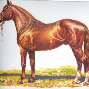 hanover horse