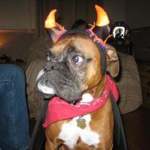 eddie halloween 2005