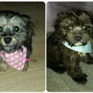 Charlie and Millie, brother and sister x