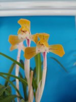 Haruka 春華 flower 2.jpeg