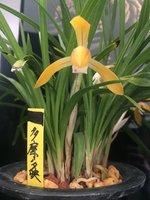 Tama no yuubae 多摩の夕映 flower 2.jpeg
