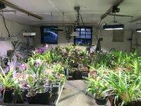 orchid_room.JPG