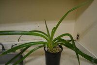 orchid_06.JPG