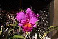 Rlc. Memoria Crispin Rosales 'No. 2'_1_23-May2021.jpg