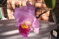 Rlc. Dream Trader3_28-Jun2021.jpg
