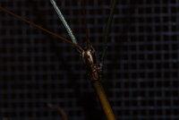 Sarah's Bugs1.jpg