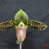 jht.orchids