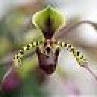 OrchidIsa