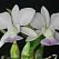 luvsorchids