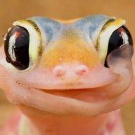 TheGecko