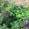 Garden Gives Me Joy