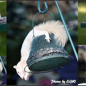 Backyard Wildlife Collage With Frame 2013Jun07