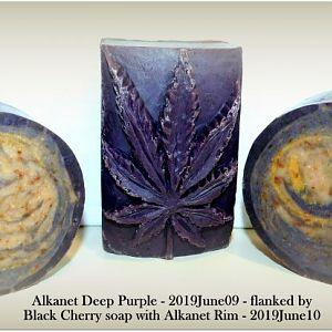 Alkanet Deep Purple_001