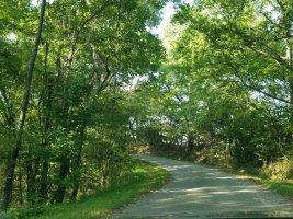 Green Pollard Hollow.jpg