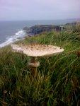 mushroom at high cliff.jpg
