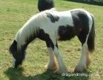 Henry the horse.jpg