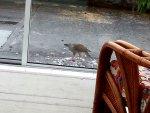 Sparrow Hawk.jpg