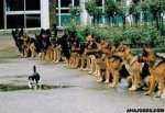 onecat.jpg