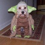 Dog Yoda.jpg