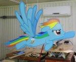 rainbow_dash_.jpg