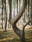 dead_tree_1.jpg