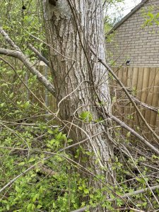 Tree 2b (1).jpg