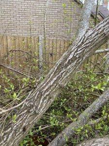 Tree 2b (4).jpg